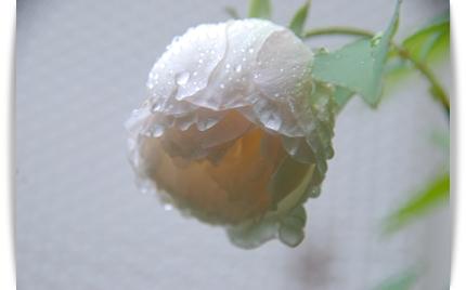 22_20101010094041.jpg