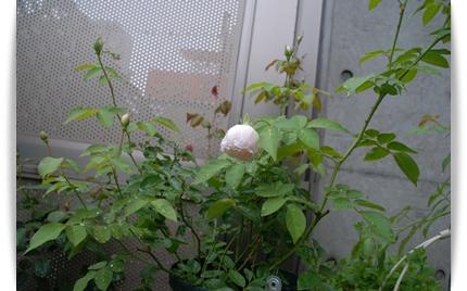 23_20101010094040.jpg