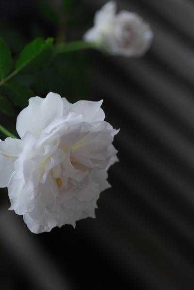 2_20111015150850.jpg
