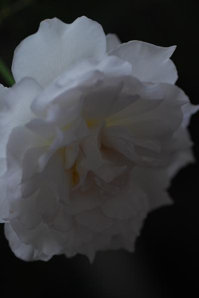 3_20111015150850.jpg