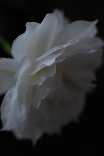 4_20111015150849.jpg