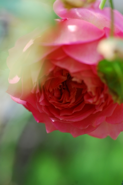 6_20111030104905.jpg