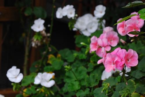 6_20111106104303.jpg