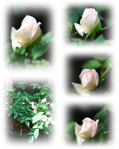 9_20100909141453.jpg