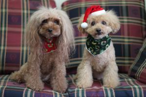 2011クリスマス。