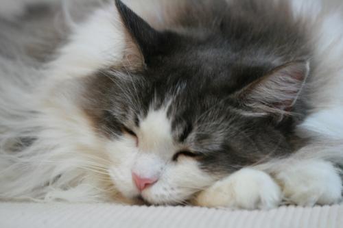 惰眠をむさぼる猫