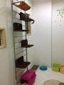 新猫部屋2