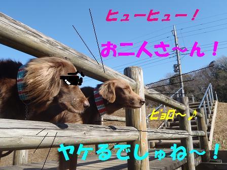 D31JAN11 015shikyou2