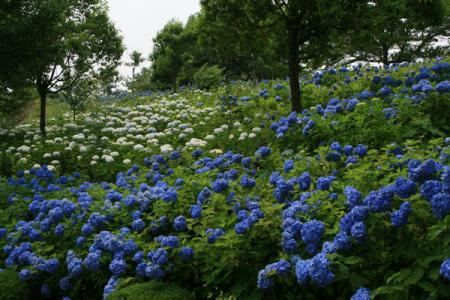 東那須野公園の夏
