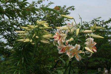 茨城県フラワーパークの夏