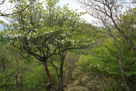 剣ヶ峰と大入道