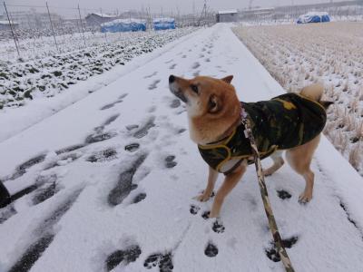 やったー雪だ!