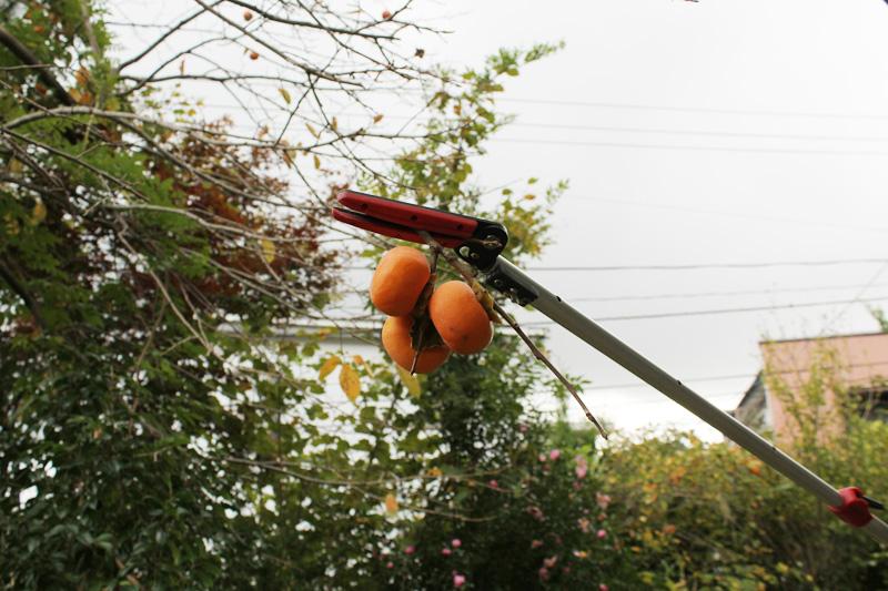 柿もいだ 2