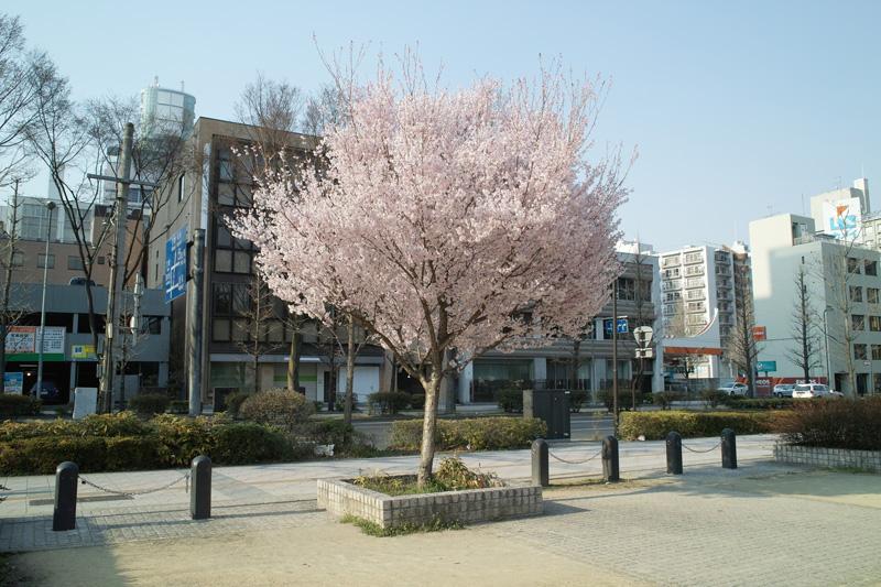 錦町公園2