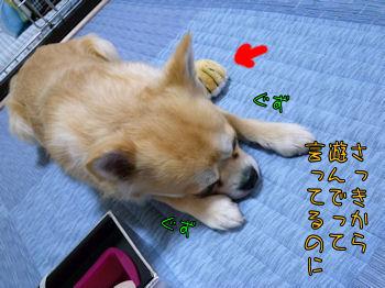 komusan_0621_006