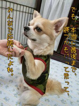 komusan_0630_004