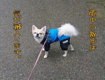 komusan_0705_002