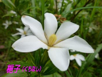 komusan_0705_004