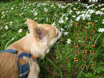 komusan_0705_005