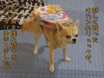 komusan_0709_001