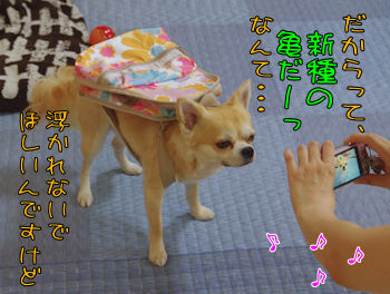 komusan_0709_002