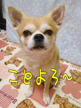 komugi_0101_006