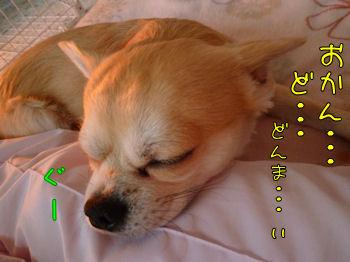 komugiokan_0104_003