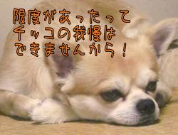 komugiokan_0106_006