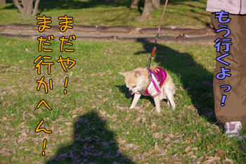 komugiokan_0121_003
