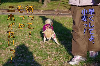 komugiokan_0121_004