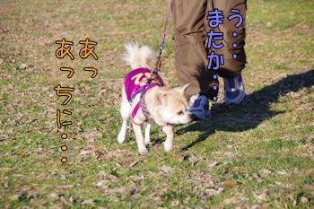 komugiokan_0121_007
