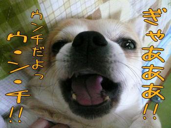 komugiokan_0128_002