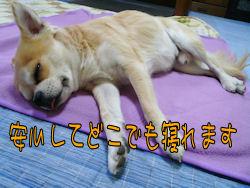 komugiokan_0128_006
