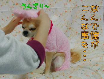 komugiokan_0201_001