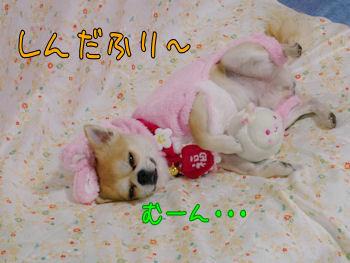 komugiokan_0201_003