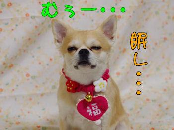komugiokan_0201_004
