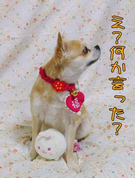 komugiokan_0201_005