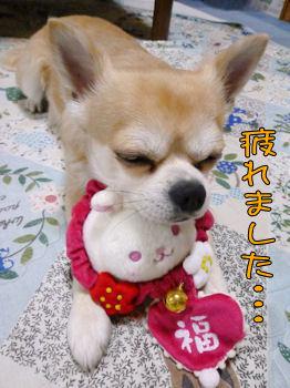 komugiokan_0201_007