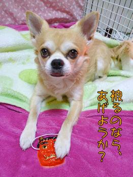 komugiokan_0203_002