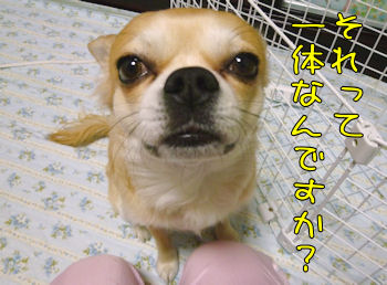 komugiokan_0217_005