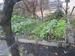 裏の野菜畑
