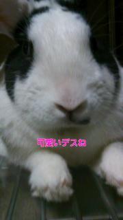 001_convert_20110425195134.jpg
