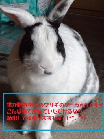 030_convert_20120501174305.jpg