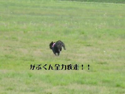 14_20110530151119.jpg