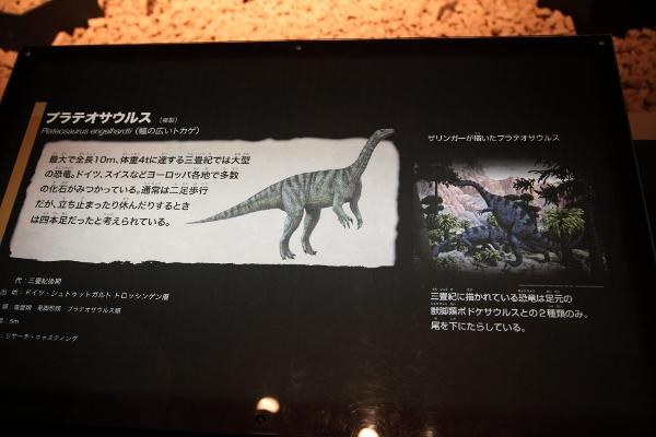 kyoryuhaku_0005f.jpg