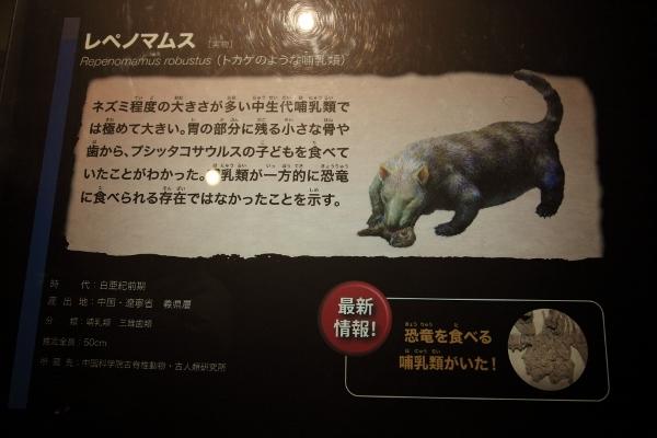 kyoryuhaku_0053f.jpg