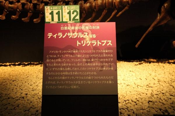 kyoryuhaku_0073f.jpg