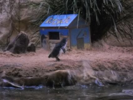 濠太剌利(オーストラリア)研修旅行記その8 シドニーぶらり旅そして水族館へ後篇(ぇ