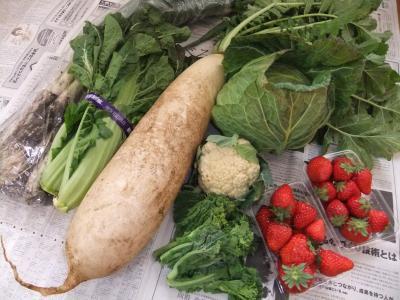 2011-01-29野菜