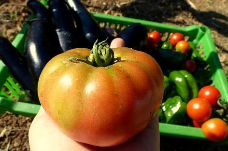 大玉フルーツトマト♪